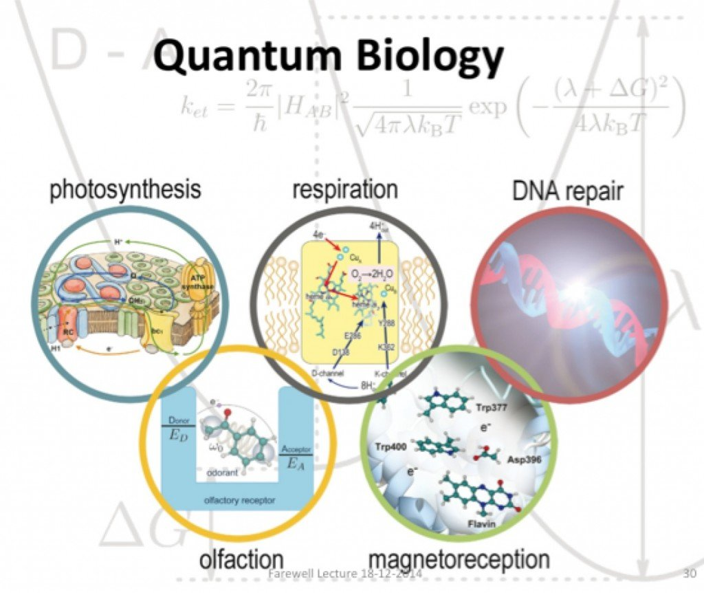 Quantum Biology (Photo Credit: beyondthirtynine.com)