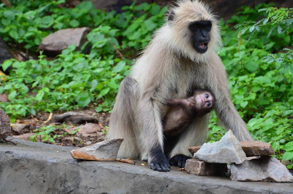 monkey grabbing mother grasp reflex