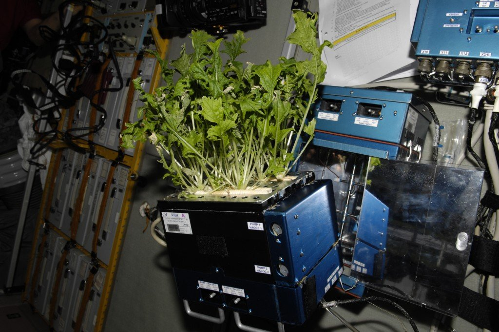 lettuce plant in space