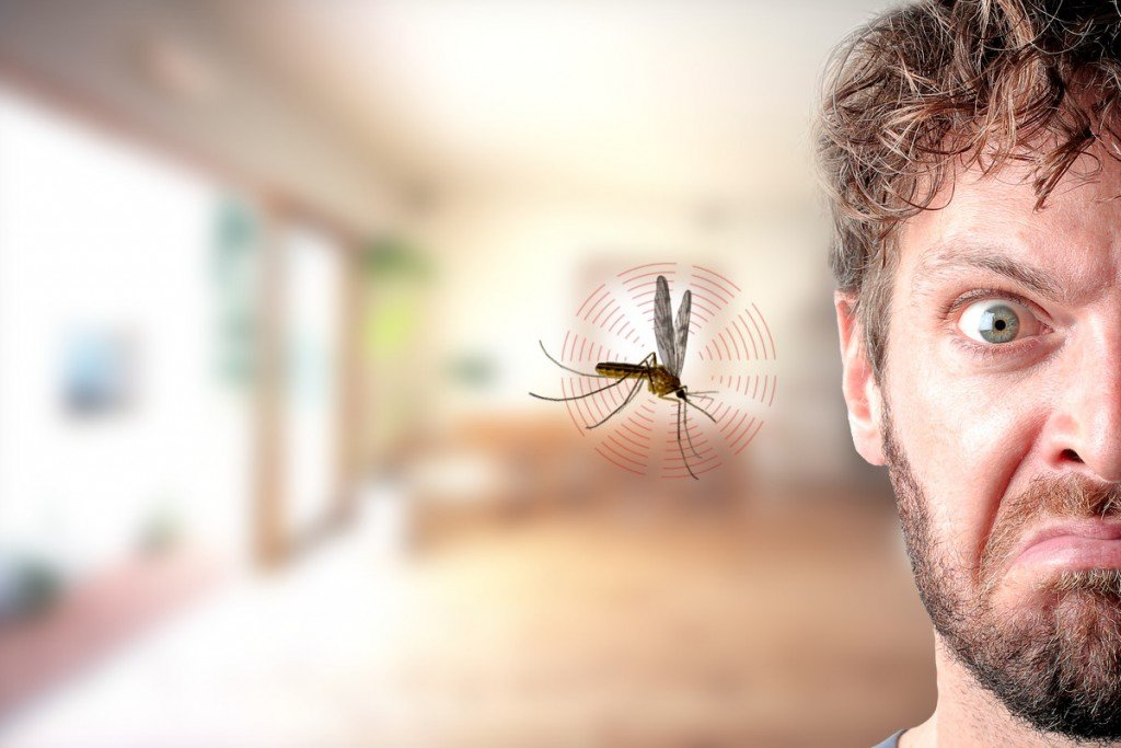 Mosquito buzzing in ear