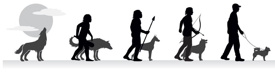 Wolves ---> Dogs (Photo Credit: thedotingskeptic.wordpress.com)