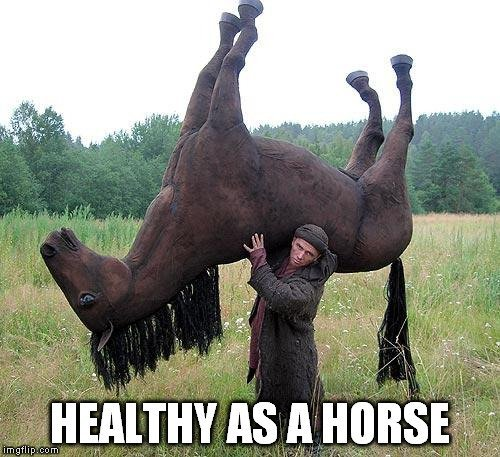 healthy as a horse meme 1