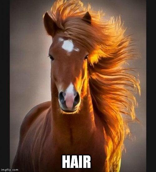 horse hair meme