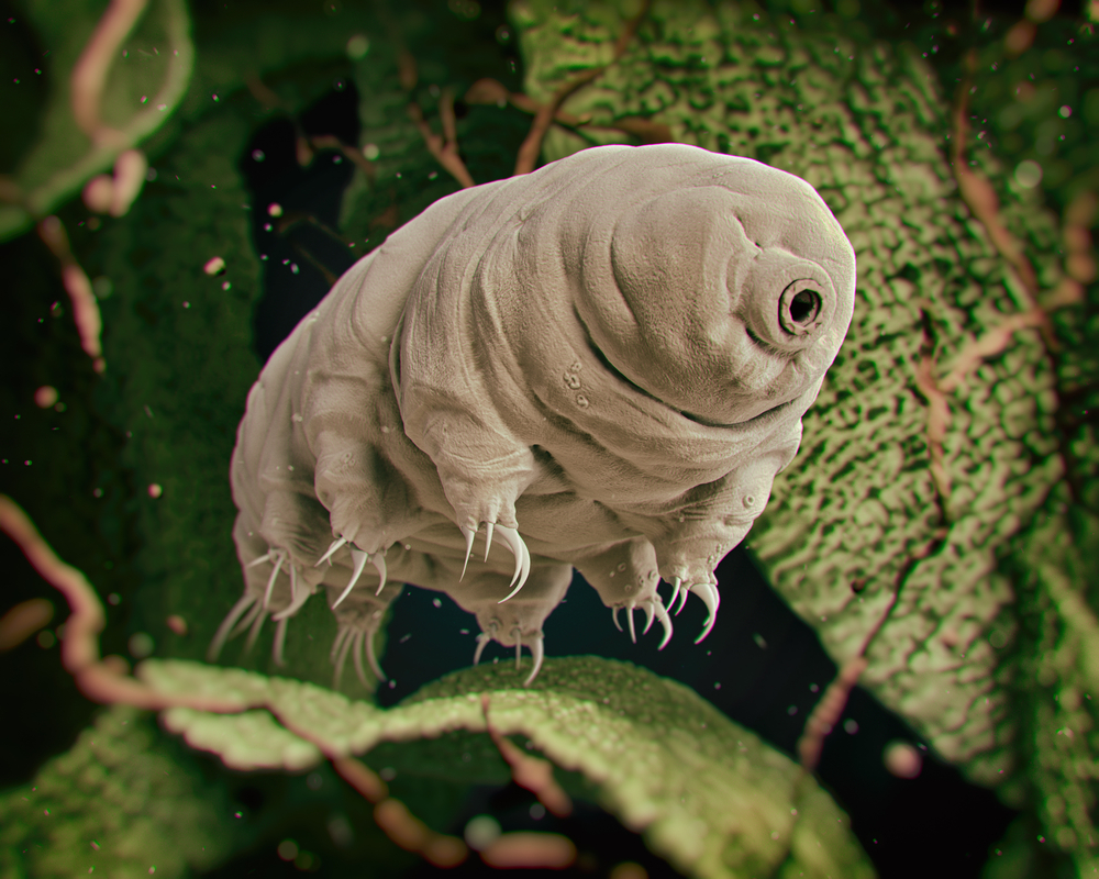 Tardigrade (Water Bear)(3Dstock)s
