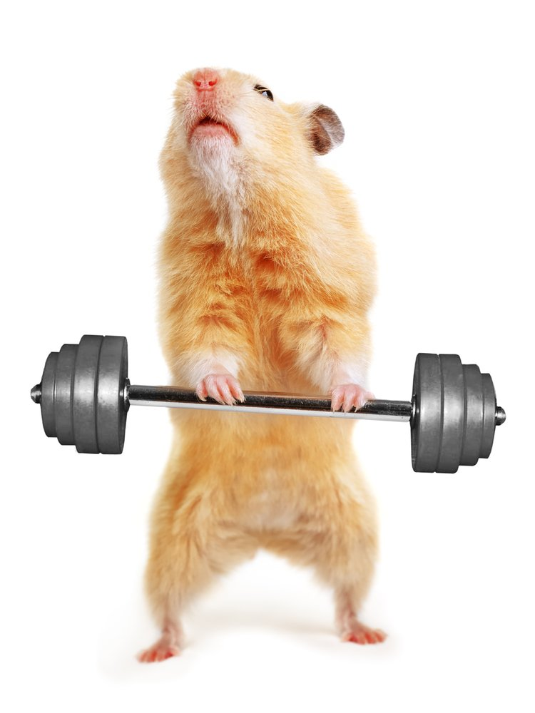 strong rodent