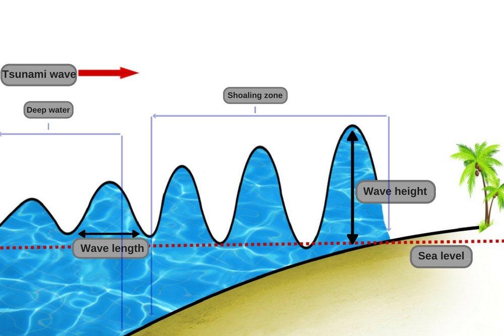 Wave shoaling tsunami