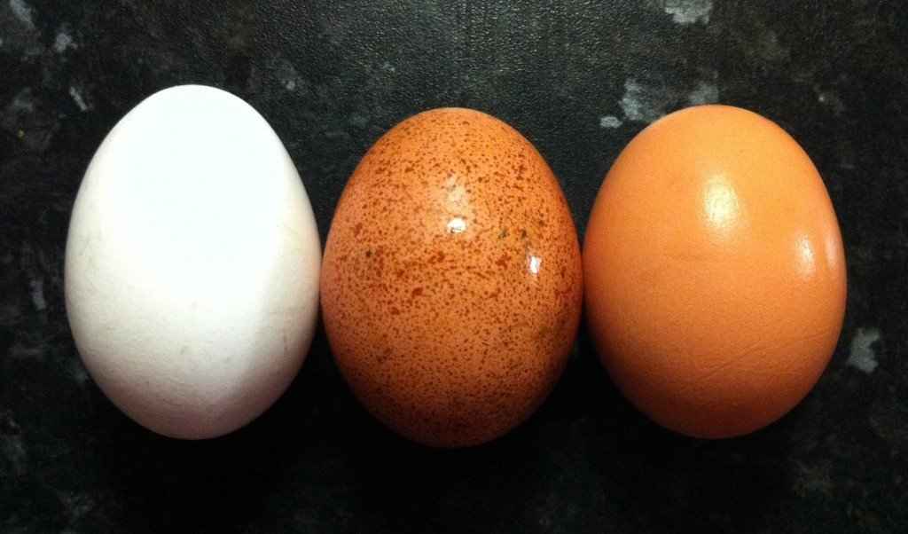 egg-colors