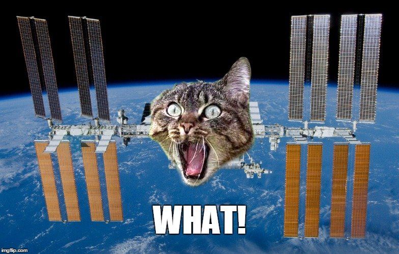 ISS Cat MEME