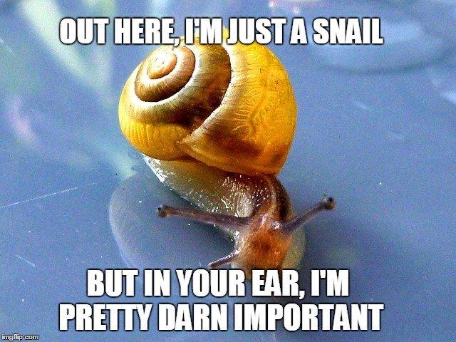 Snail meme