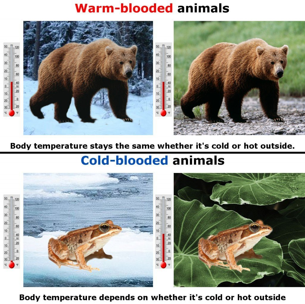 Warm & cold blooded animals body temprature