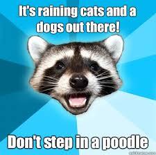 Raining Dogs meme