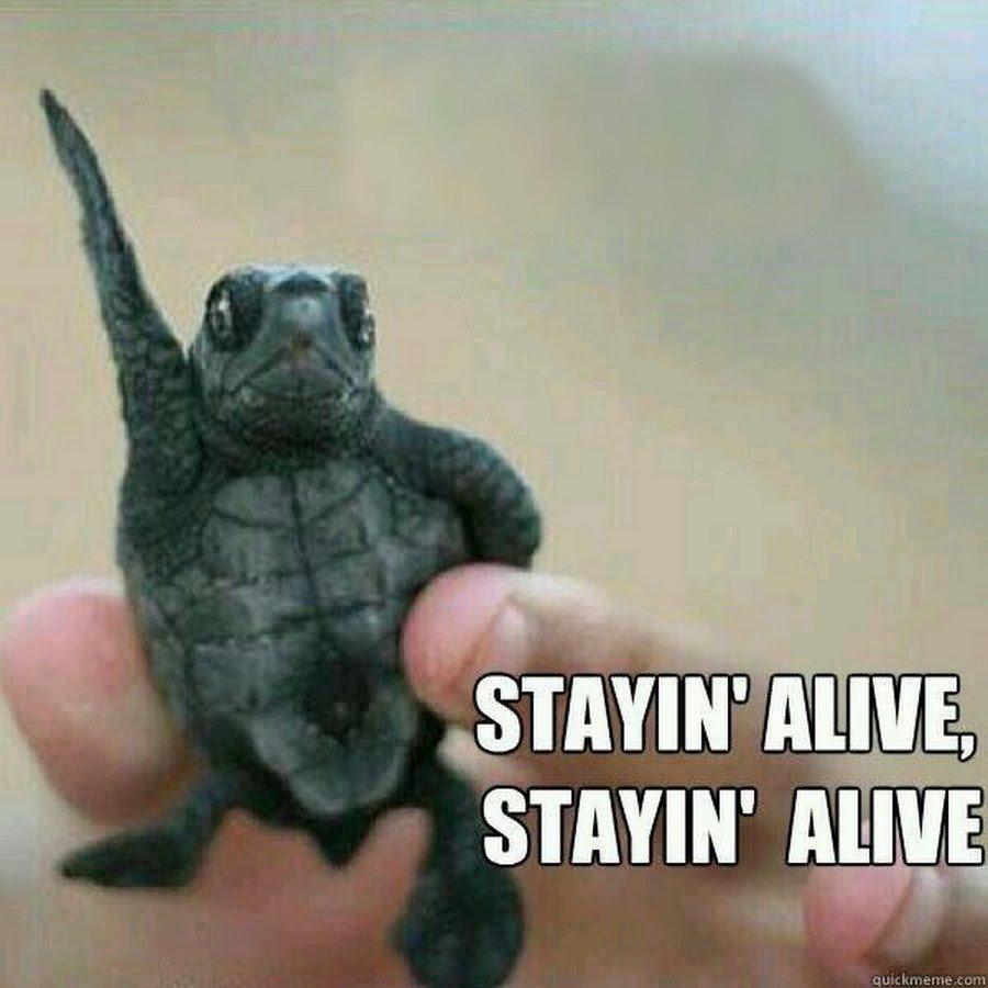 turtle-meme