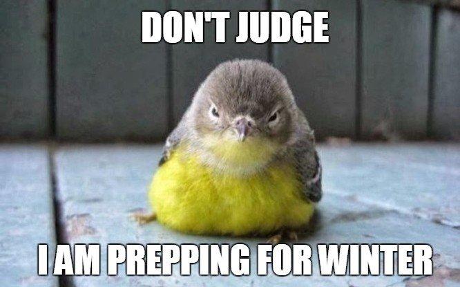 Fat bird meme