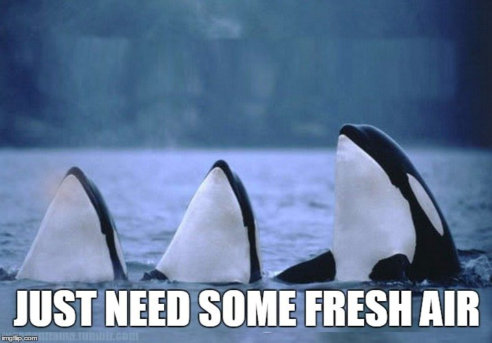 whale-need-fresh-air-meme
