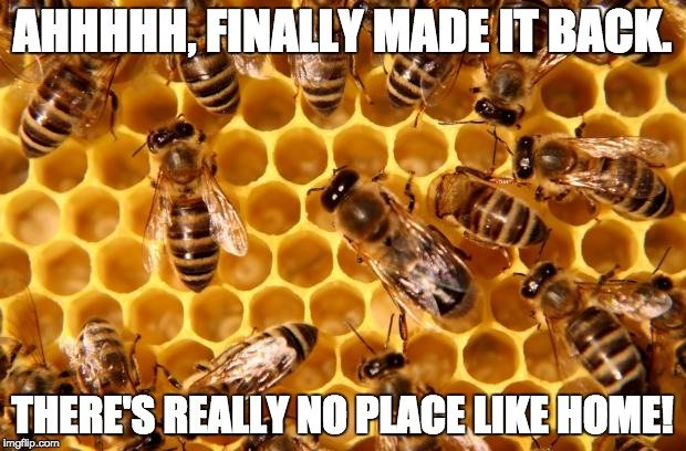 , How Do Bees Find Their Way Back to the Hive?, Science ABC, Science ABC