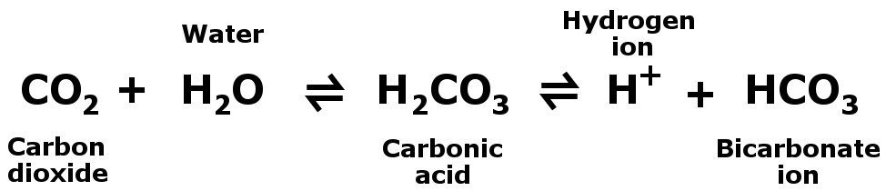 , Why Does the Human Body Release Carbon Dioxide?, Science ABC, Science ABC