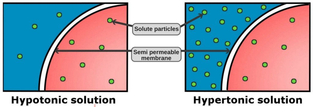 Hypotonic solution & hypertonic solution particles