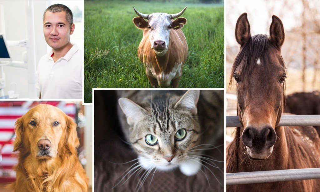 Man dog cat horse cow collage Warm-blooded animals image