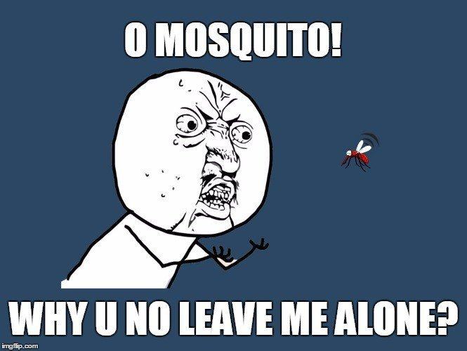, Where Do Mosquitoes Go During Daytime?, Science ABC, Science ABC
