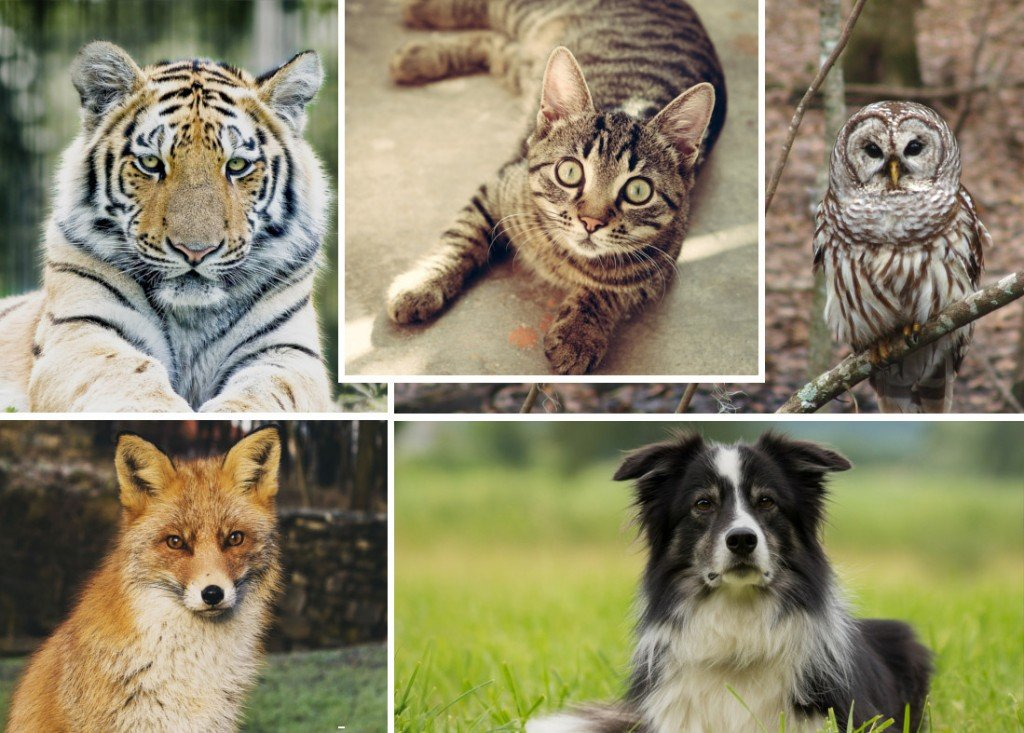 animals with night vision better than humans and you know the drill Dog cat owl tiger fox