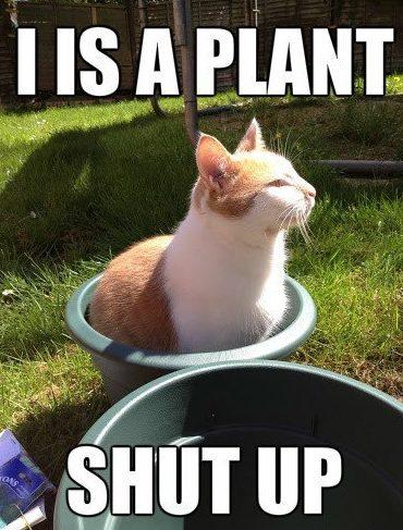 Plant meme