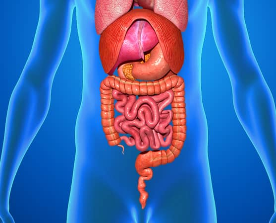 human stomach body weird organs feel hurt why gut emotionally does humans sciencepics shutterstock credit scienceabc