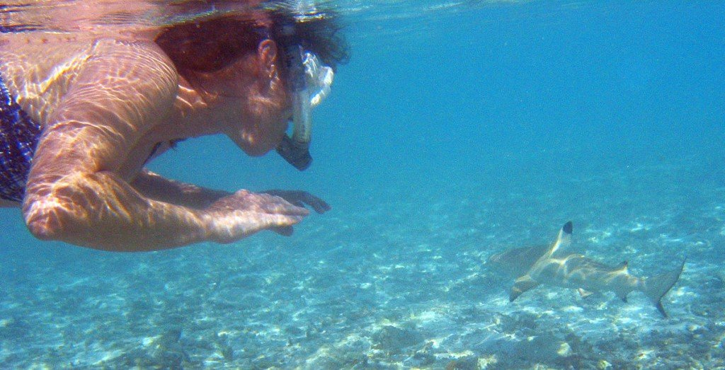 Snorkeler with blacktip reef shark