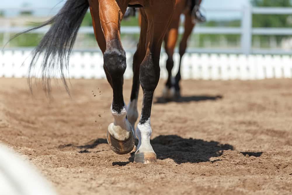 Horse thin lower leg