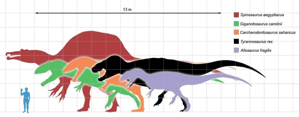 size comparison of dinosaurs