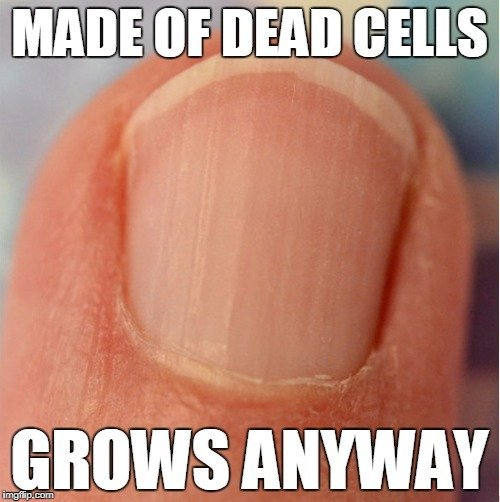 , Why Do Humans Have Fingernails And Toenails?, Science ABC, Science ABC