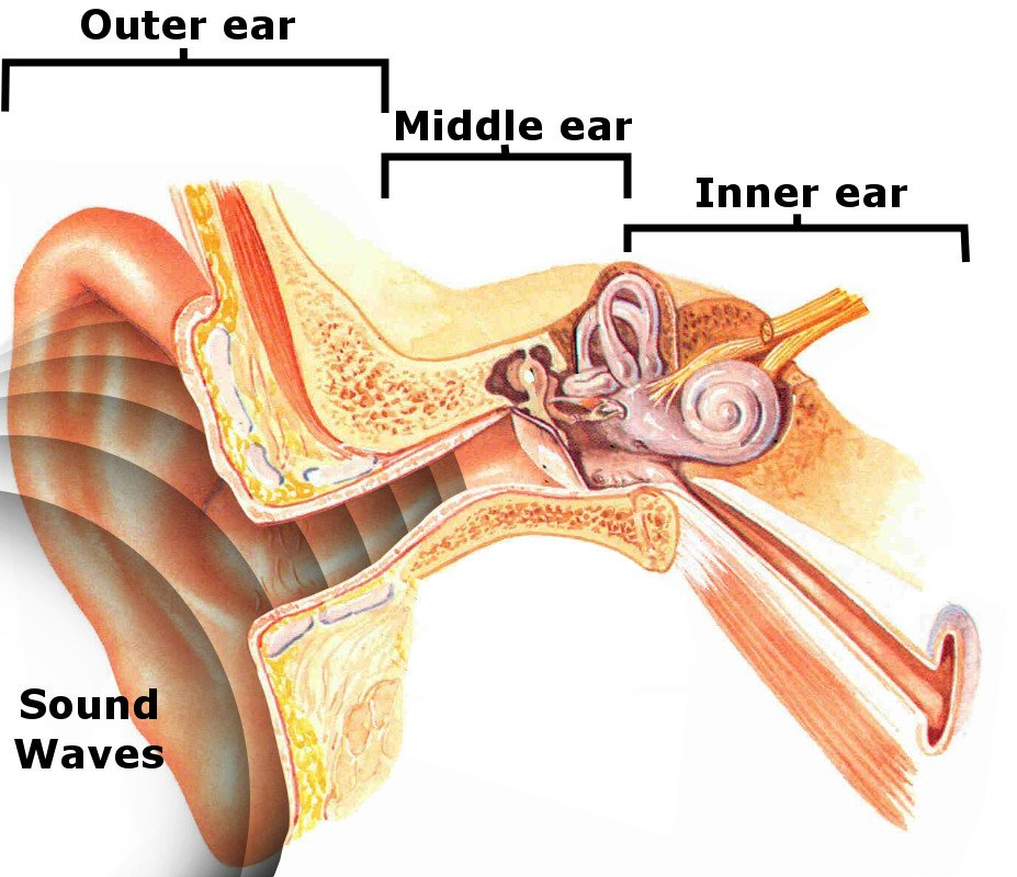 Ear compartments