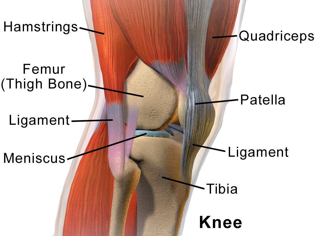 Knee Anatomy Side