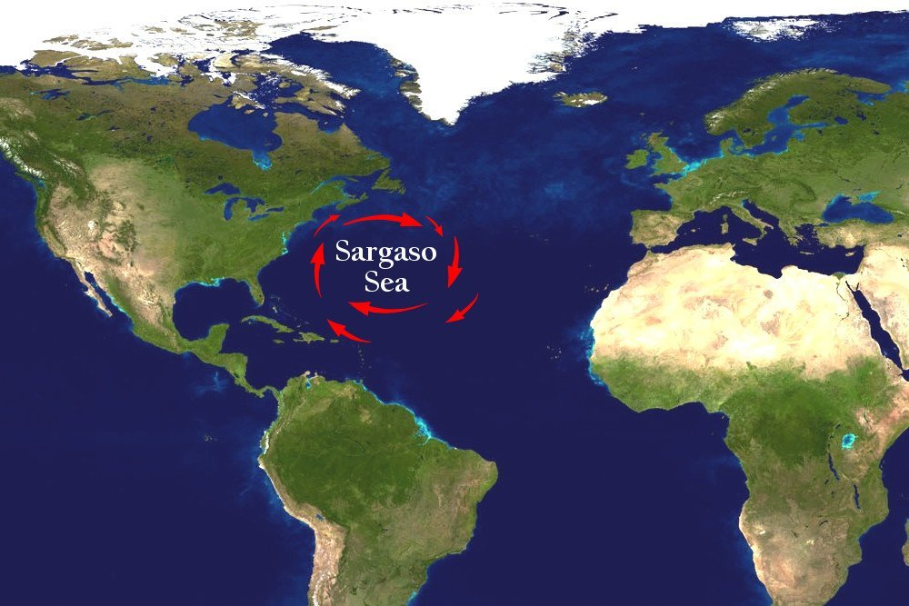 Sargaso sea in world map