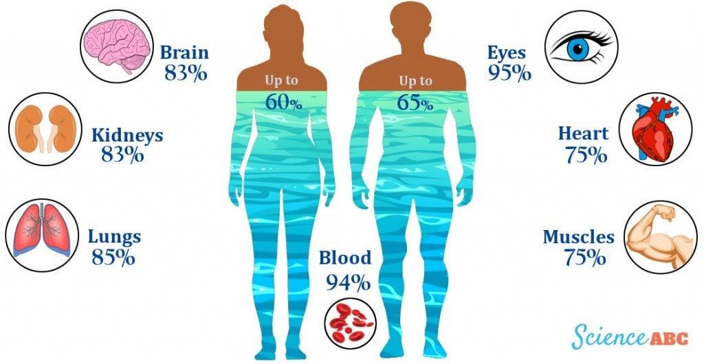 The water tide inside human body_