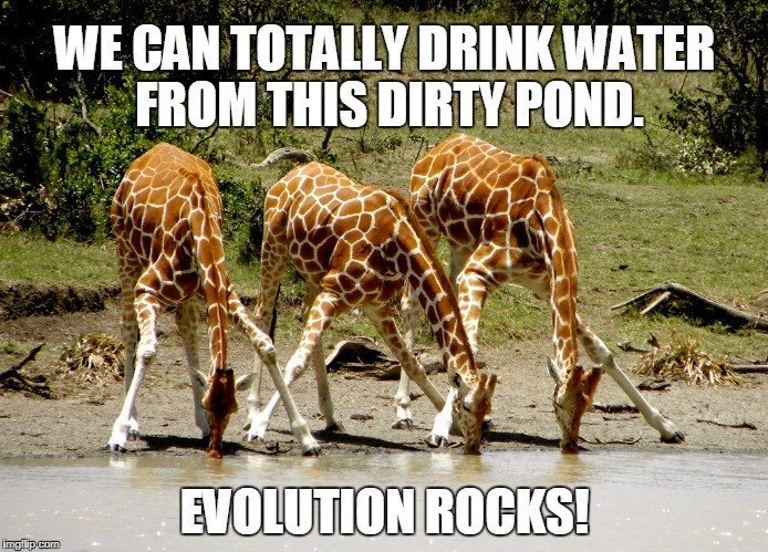 , How Can Wild Animals Drink Water From Dirty Ponds And Lakes And Not Get Sick?, Science ABC, Science ABC