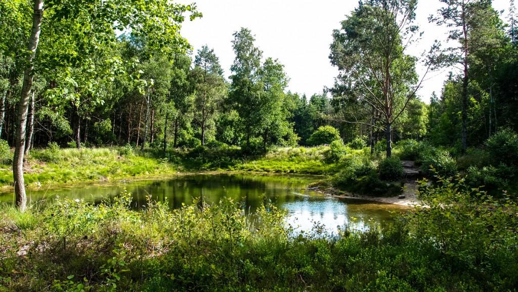 small pond in jungle