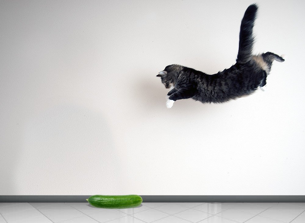 Cat scared of cucumber