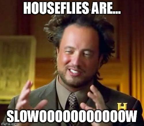 Houseflies are slowoooooooooow meme