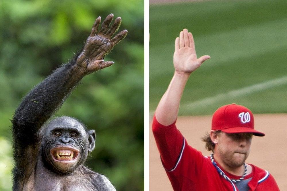 Man & chimpanzee hand