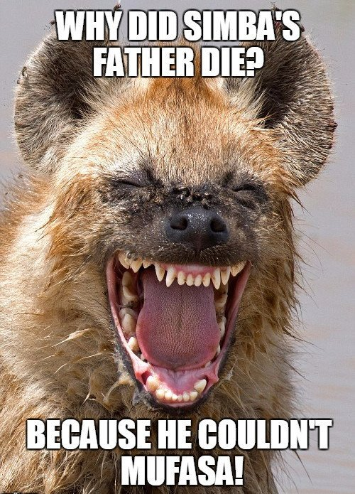 , Why Do Hyenas Laugh?, Science ABC, Science ABC