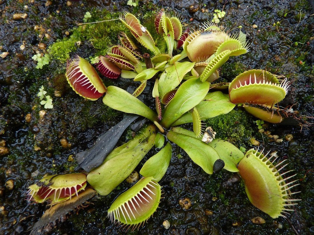 , Why Are Some Plants Carnivorous?, Science ABC, Science ABC