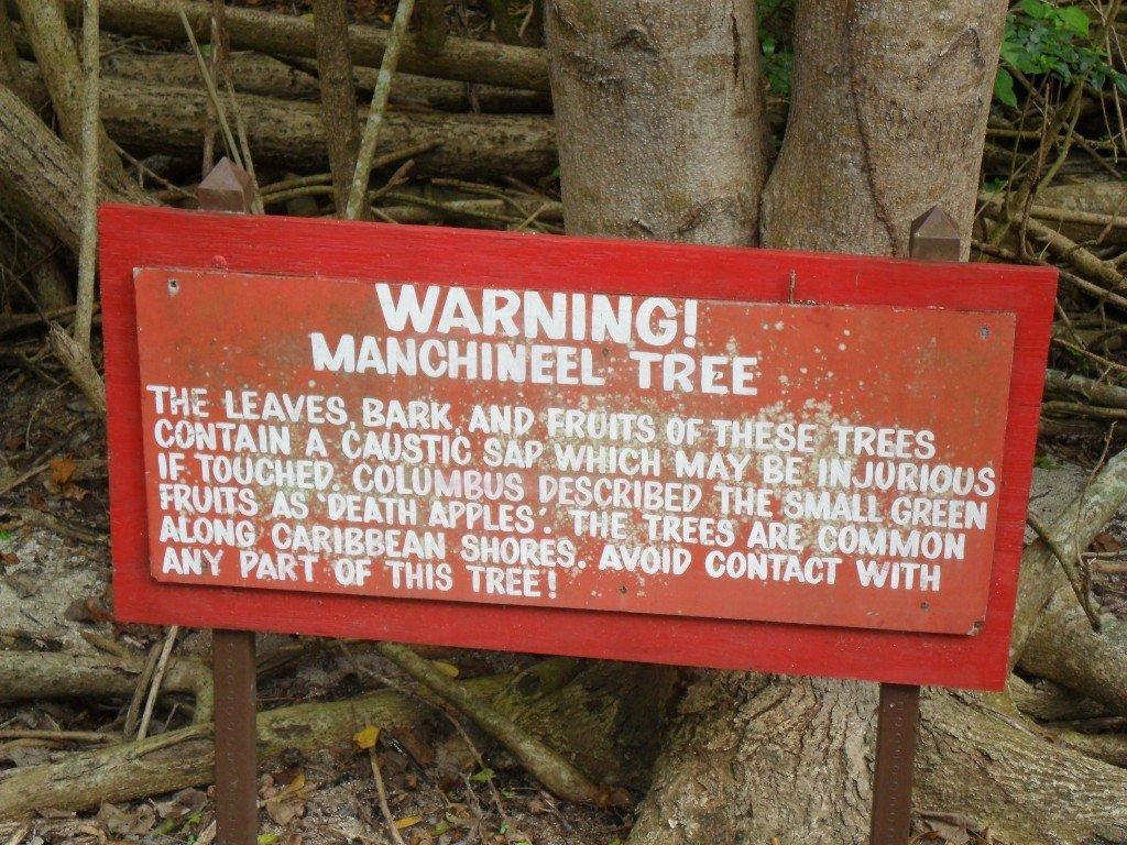 Manchineel tree warning board