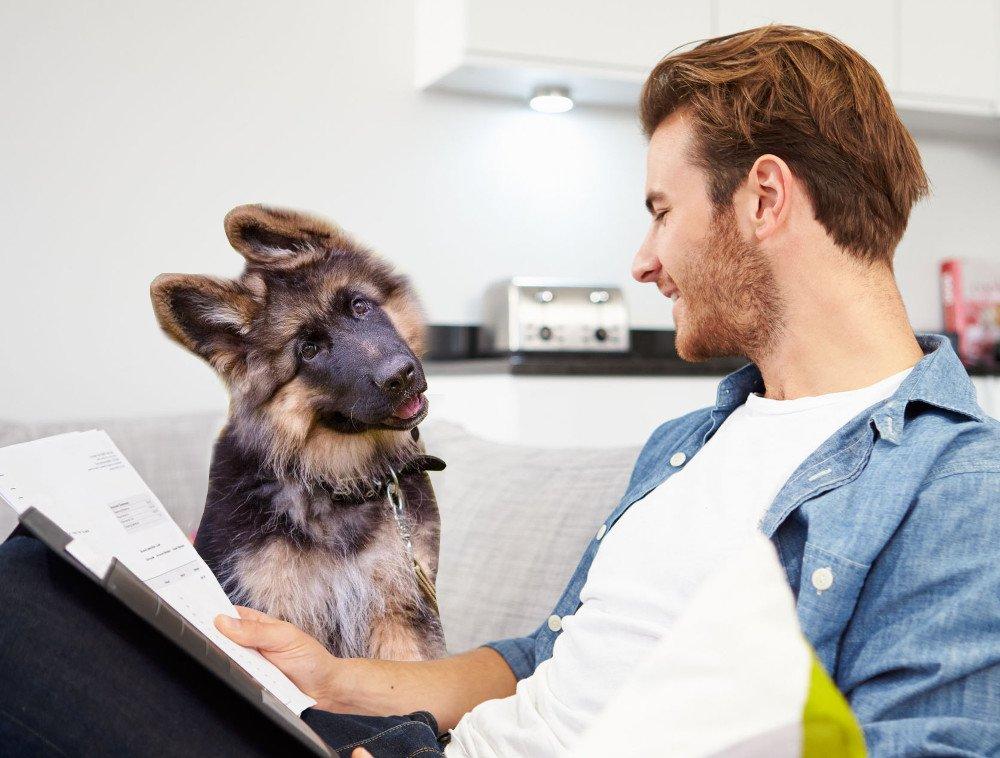 , Why Do Dogs Tilt Their Heads?, Science ABC, Science ABC