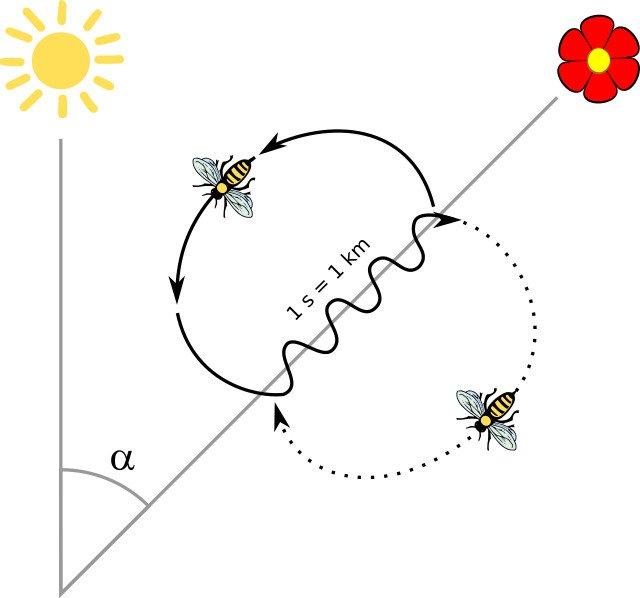 bee waggle