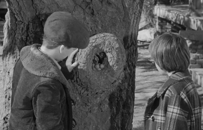 knothole to kill a mockingbird