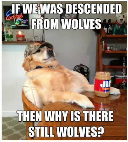 If we was descended from wolves then why s there still wolves meme