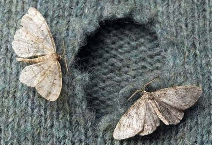 , What Do Moths Eat?, Science ABC, Science ABC