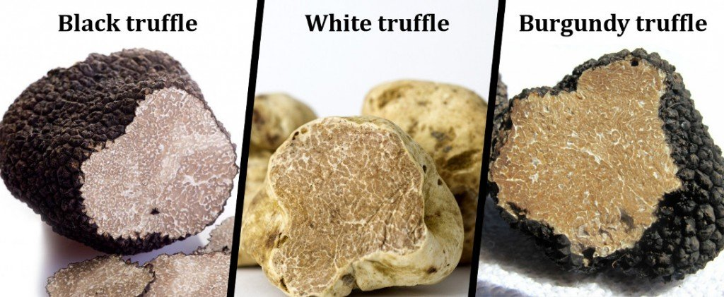 , What Are Truffles and Why Are They So Expensive?, Science ABC, Science ABC