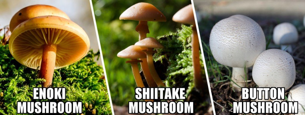 , What's The Difference Between Mushrooms And Toadstools?, Science ABC, Science ABC