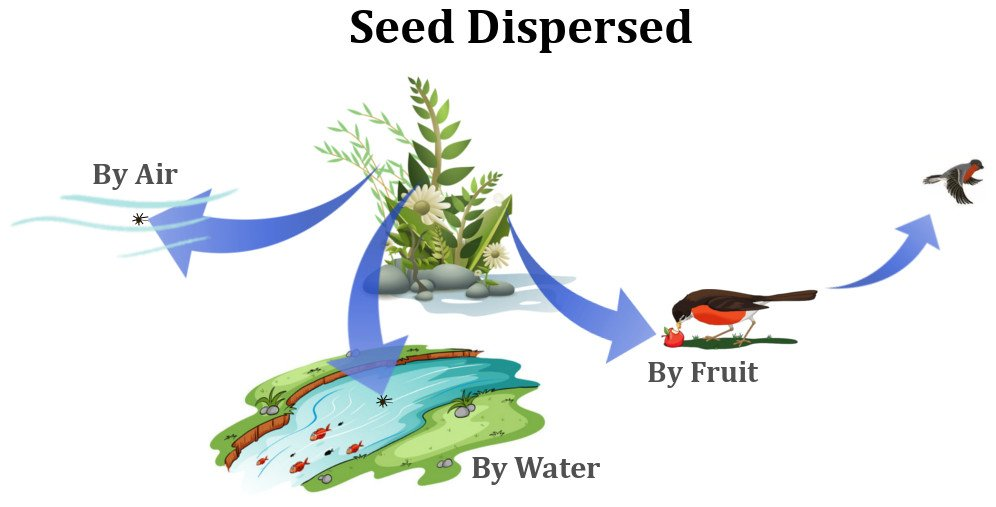 Seed dispersed by air, water, fruit
